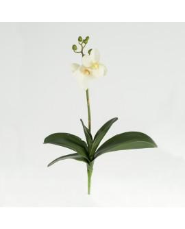 Orhidee valge 35 cm